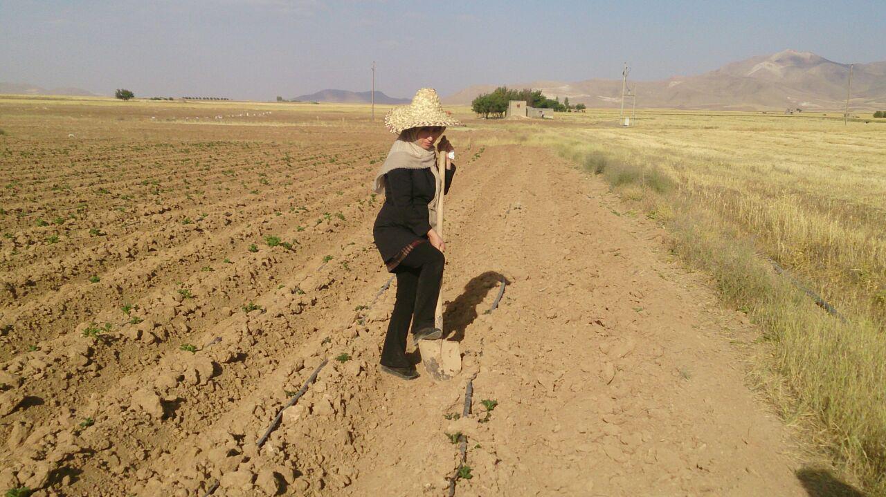 کشت زعفران برای نخستین بار در استان کردستان با استفاده از تسهیلات اقتصاد مقاومتی
